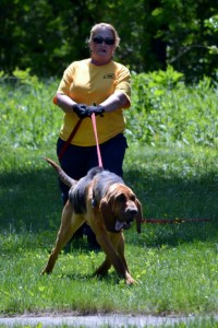 VBSAR Bloodhound Search & Rescue Seminar