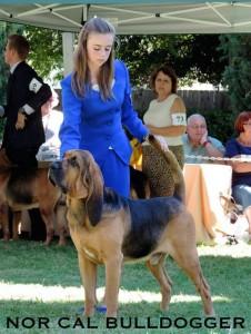8karissa-groves-1st-bloodhound-national
