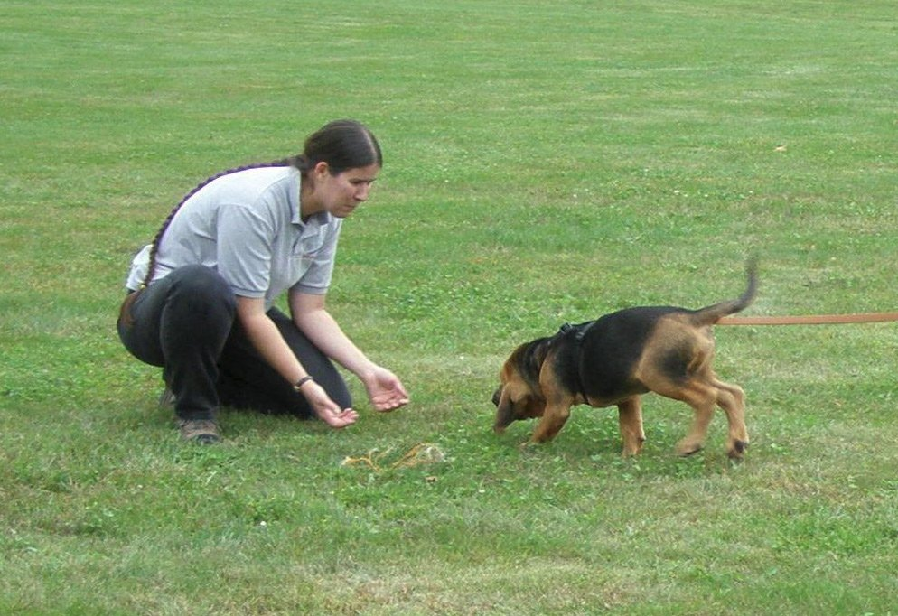 Training a puppy in Mantrailing.