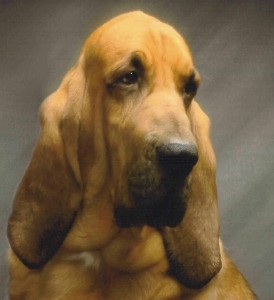 bloodhound for judges education