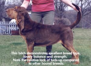 judgingthebloodhound4